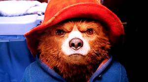 paddington bear stare